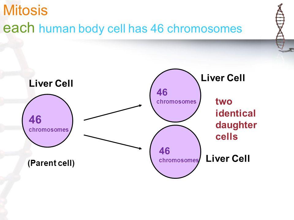 How many sex chromosomes do humans contain