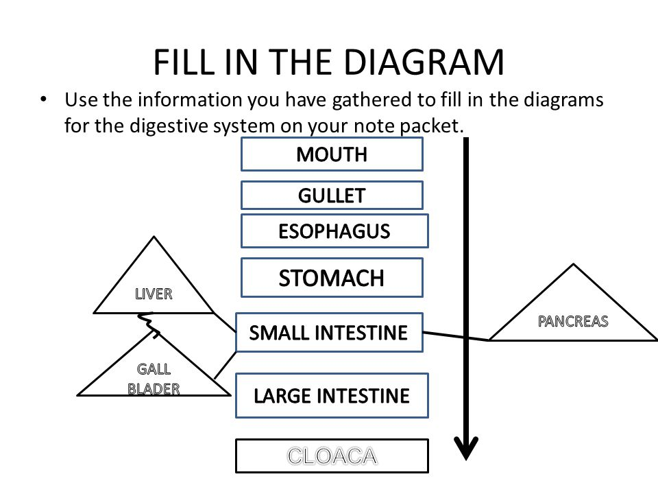 Digestive system flowchart create a flowchart 9 fill in the diagram use the information you have gathered to fill in the diagrams ccuart Images