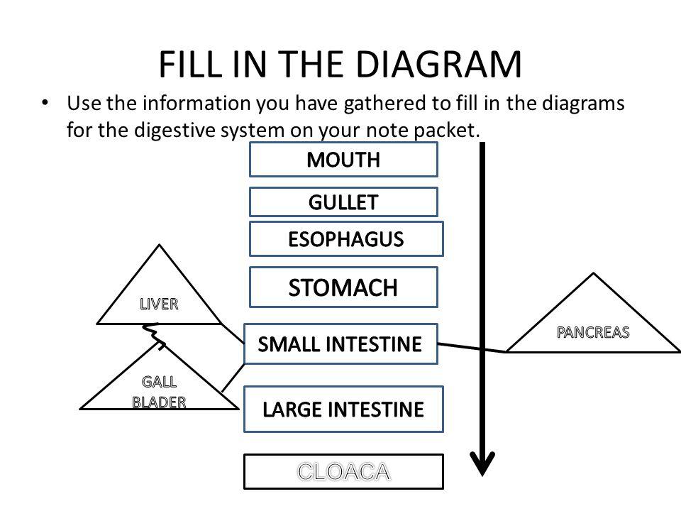 Digestive System Flowchart Flowchart In Word