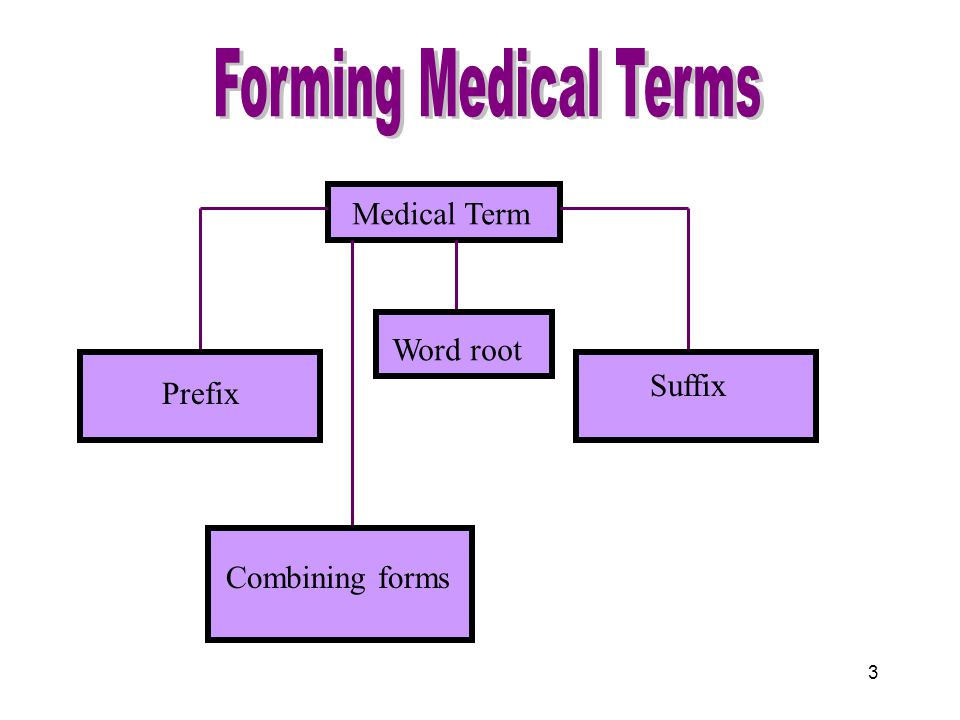 1 Building Medical Terms Word Root Prefix Suffi x Combining forms ...