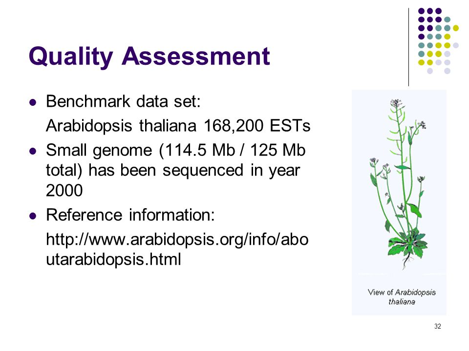 32 Quality Assessment Benchmark data set: Arabidopsis thaliana 168,200 ESTs Small genome (114.5 Mb / 125 Mb total) has been sequenced in year 2000 Reference information:   utarabidopsis.html