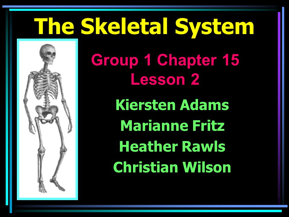 The Skeletal System Kiersten Adams Marianne Fritz Heather Rawls Christian Wilson Group 1 Chapter 15 Lesson 2