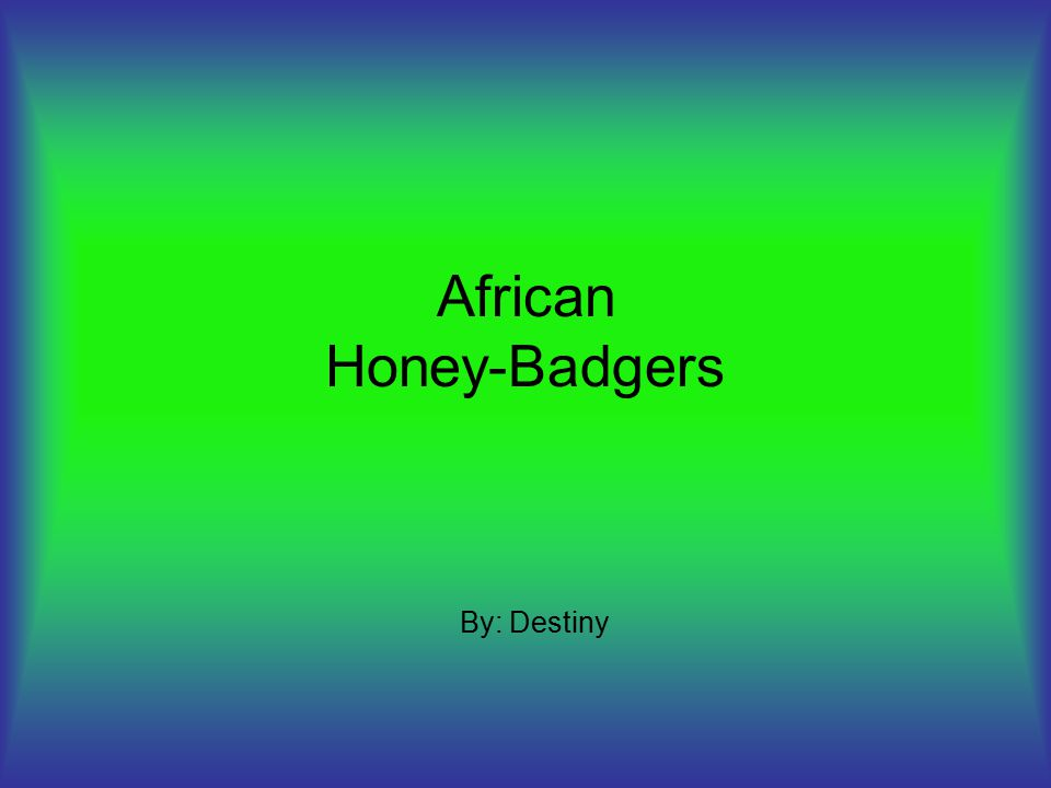 African Honey-Badgers By: Destiny