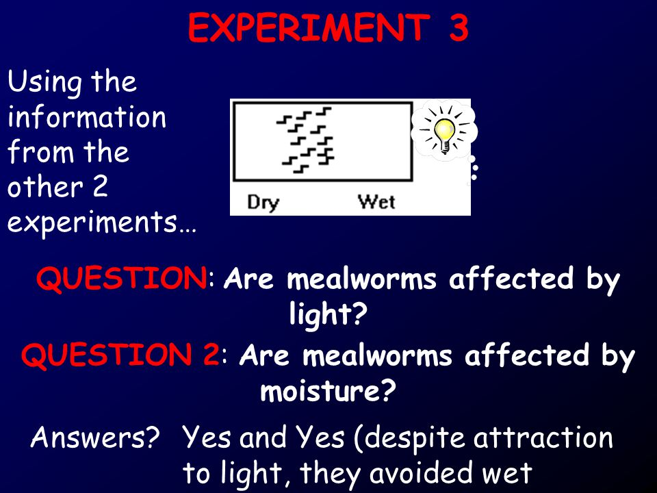EXPERIMENT 3 QUESTION: Are mealworms affected by light.