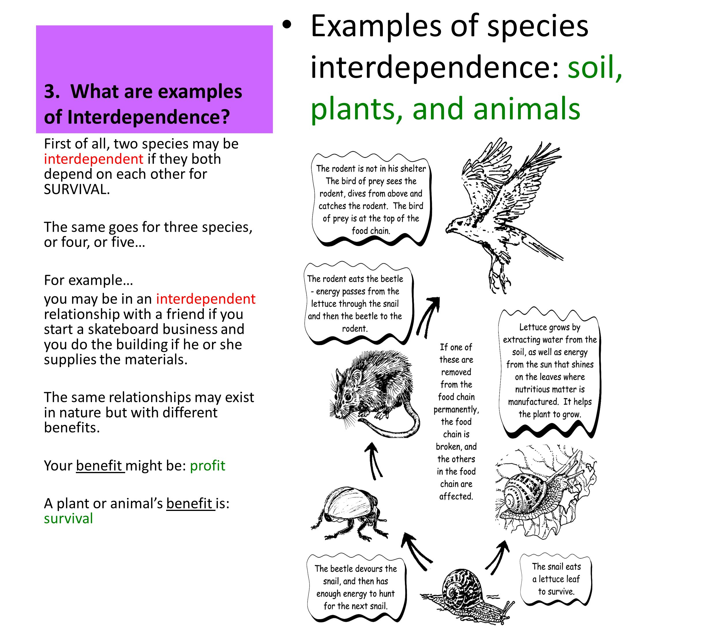 Interdependent Relationships In Ecosystems 1what Is An Ecosystem 2