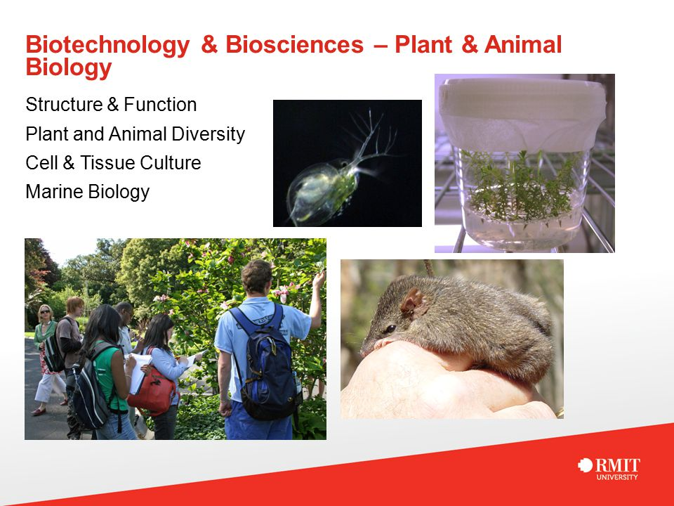 Biotechnology & Biosciences – Plant & Animal Biology Structure & Function Plant and Animal Diversity Cell & Tissue Culture Marine Biology