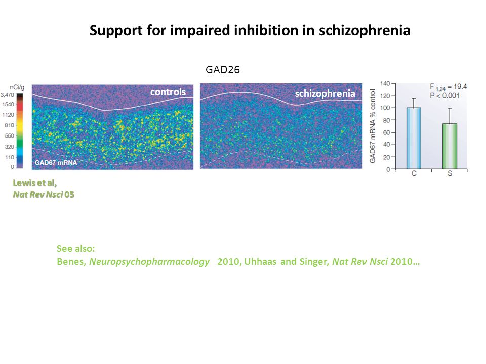 Lewis et al, Nat Rev Nsci 05 controls schizophrenia Support for impaired inhibition in schizophrenia See also: Benes, Neuropsychopharmacology 2010, Uhhaas and Singer, Nat Rev Nsci 2010… GAD26