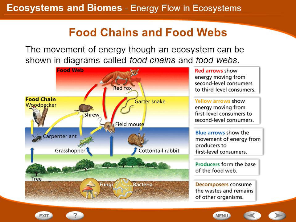 Ecosystems and Biomes Food Chains and Food Webs The movement of energy though an ecosystem can be shown in diagrams called food chains and food webs.