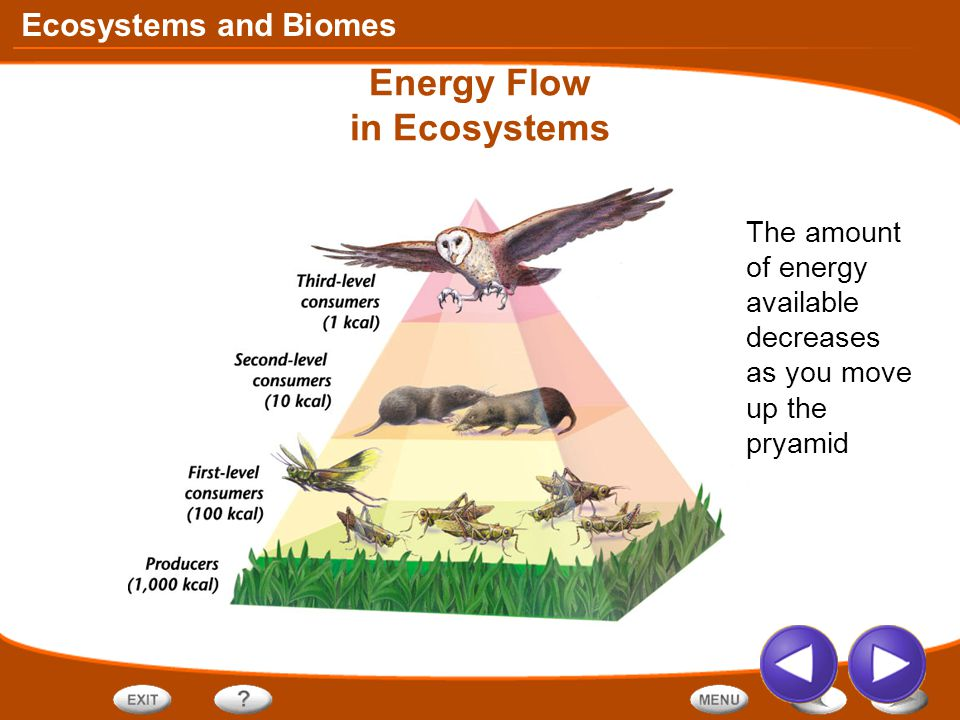 Ecosystems and Biomes Energy Flow in Ecosystems The amount of energy available decreases as you move up the pryamid