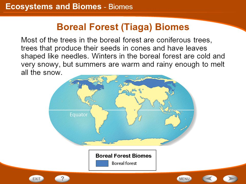 Ecosystems and Biomes Boreal Forest (Tiaga) Biomes Most of the trees in the boreal forest are coniferous trees, trees that produce their seeds in cones and have leaves shaped like needles.