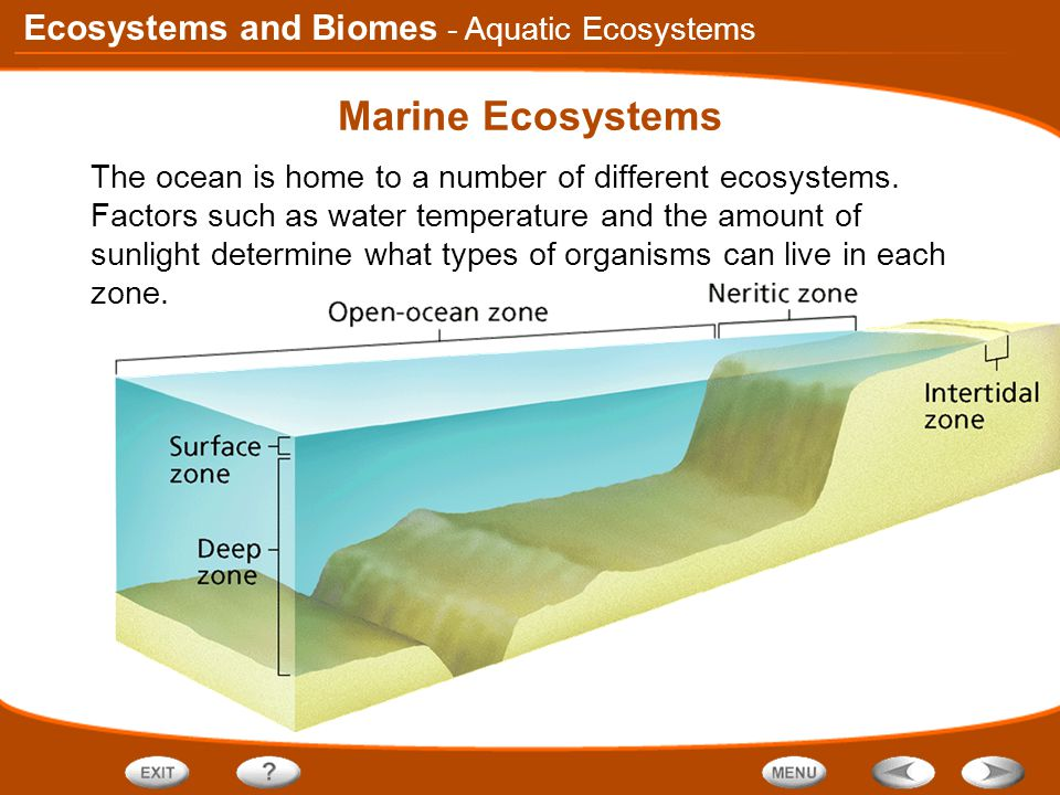 Ecosystems and Biomes Marine Ecosystems The ocean is home to a number of different ecosystems.