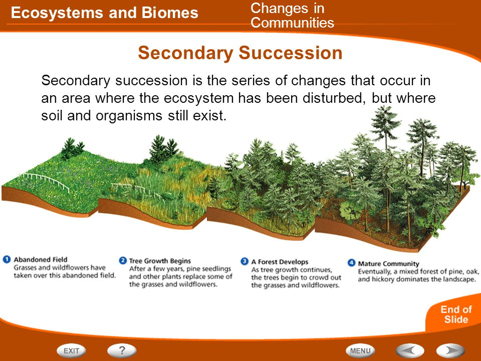Ecosystems and Biomes Secondary Succession Secondary succession is the series of changes that occur in an area where the ecosystem has been disturbed, but where soil and organisms still exist.