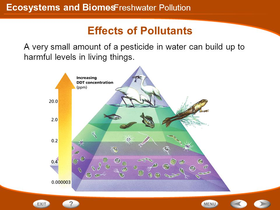 Ecosystems and Biomes Effects of Pollutants A very small amount of a pesticide in water can build up to harmful levels in living things.