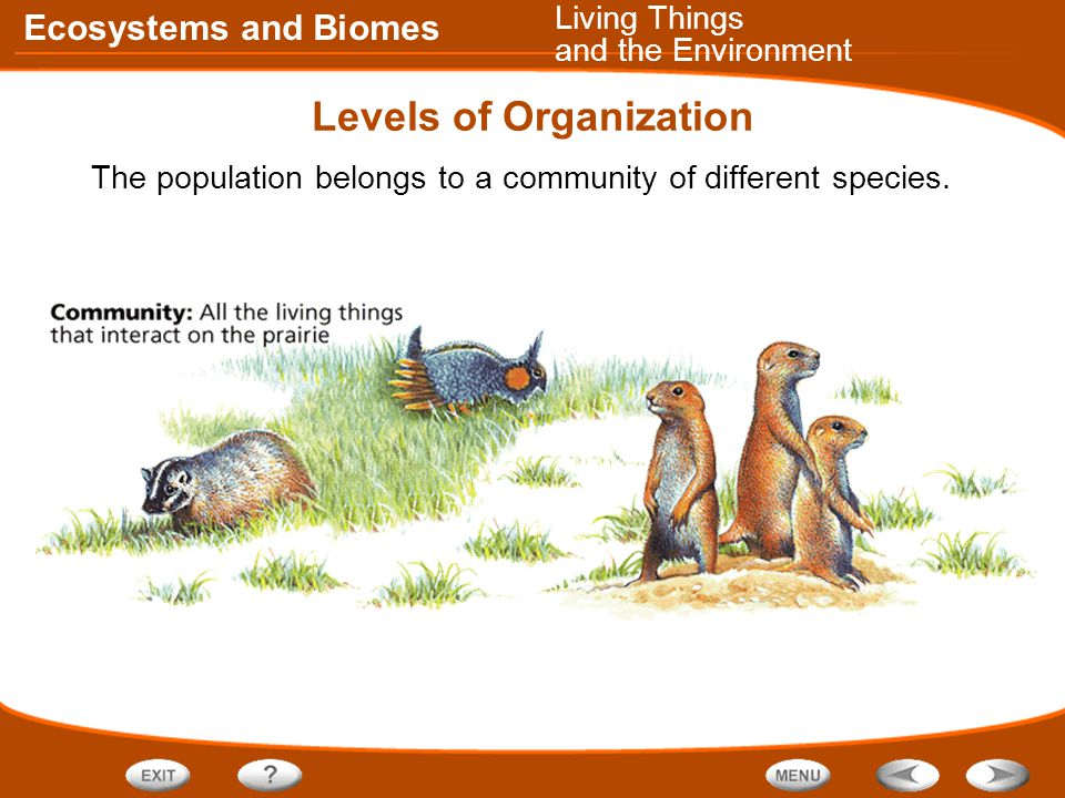 Ecosystems and Biomes Levels of Organization The population belongs to a community of different species.