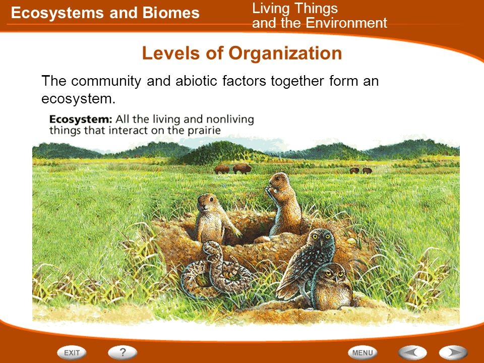 Ecosystems and Biomes Levels of Organization The community and abiotic factors together form an ecosystem.