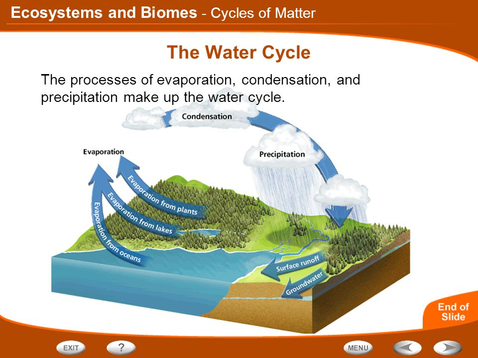 Ecosystems and Biomes The Water Cycle - Cycles of Matter The processes of evaporation, condensation, and precipitation make up the water cycle.