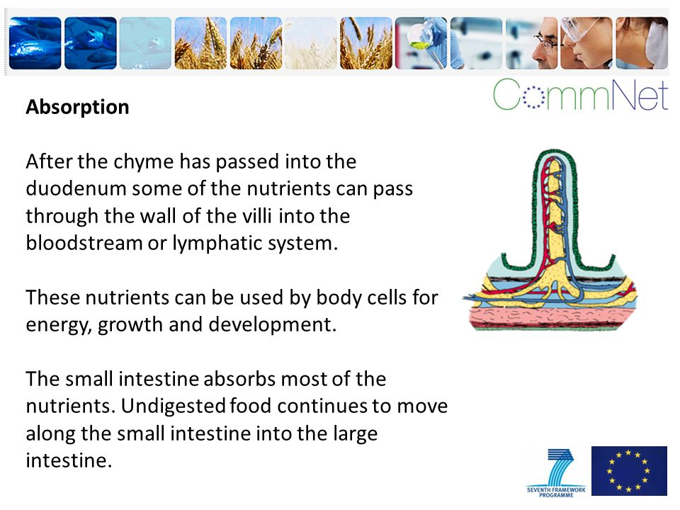 Absorption After the chyme has passed into the duodenum some of the nutrients can pass through the wall of the villi into the bloodstream or lymphatic system.