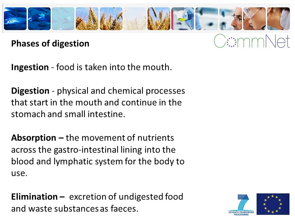 Phases of digestion Ingestion - food is taken into the mouth.