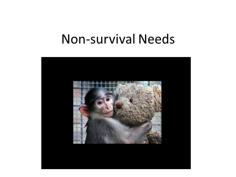 Non-survival Needs