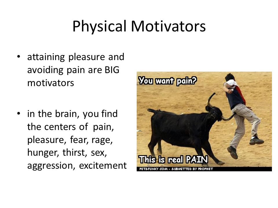 Physical Motivators attaining pleasure and avoiding pain are BIG motivators in the brain, you find the centers of pain, pleasure, fear, rage, hunger, thirst, sex, aggression, excitement