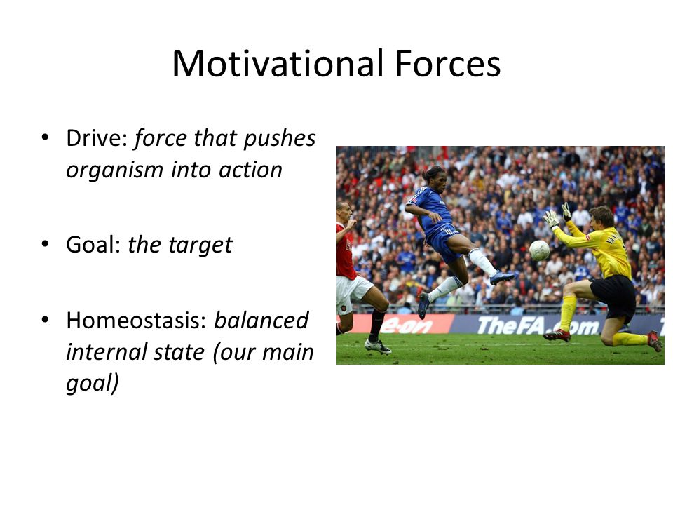 Motivational Forces Drive: force that pushes organism into action Goal: the target Homeostasis: balanced internal state (our main goal)