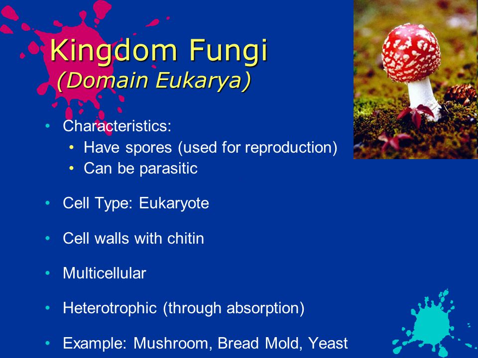 Kingdom Fungi (Domain Eukarya) Characteristics: Have spores (used for reproduction) Can be parasitic Cell Type: Eukaryote Cell walls with chitin Multicellular Heterotrophic (through absorption) Example: Mushroom, Bread Mold, Yeast