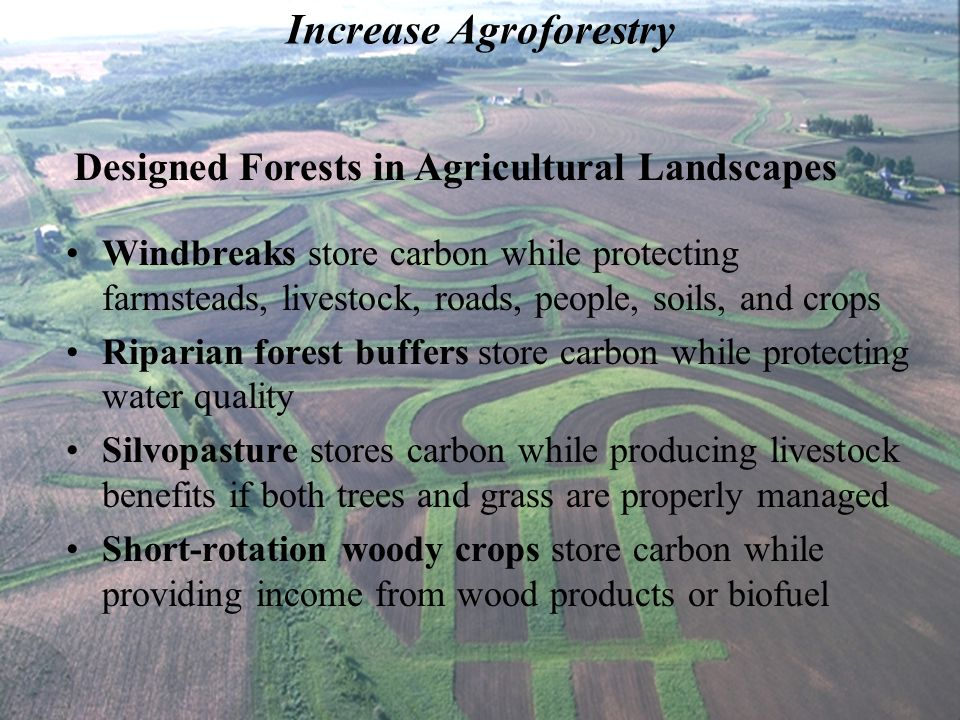 Increase Agroforestry Windbreaks store carbon while protecting farmsteads, livestock, roads, people, soils, and crops Riparian forest buffers store carbon while protecting water quality Silvopasture stores carbon while producing livestock benefits if both trees and grass are properly managed Short-rotation woody crops store carbon while providing income from wood products or biofuel Designed Forests in Agricultural Landscapes