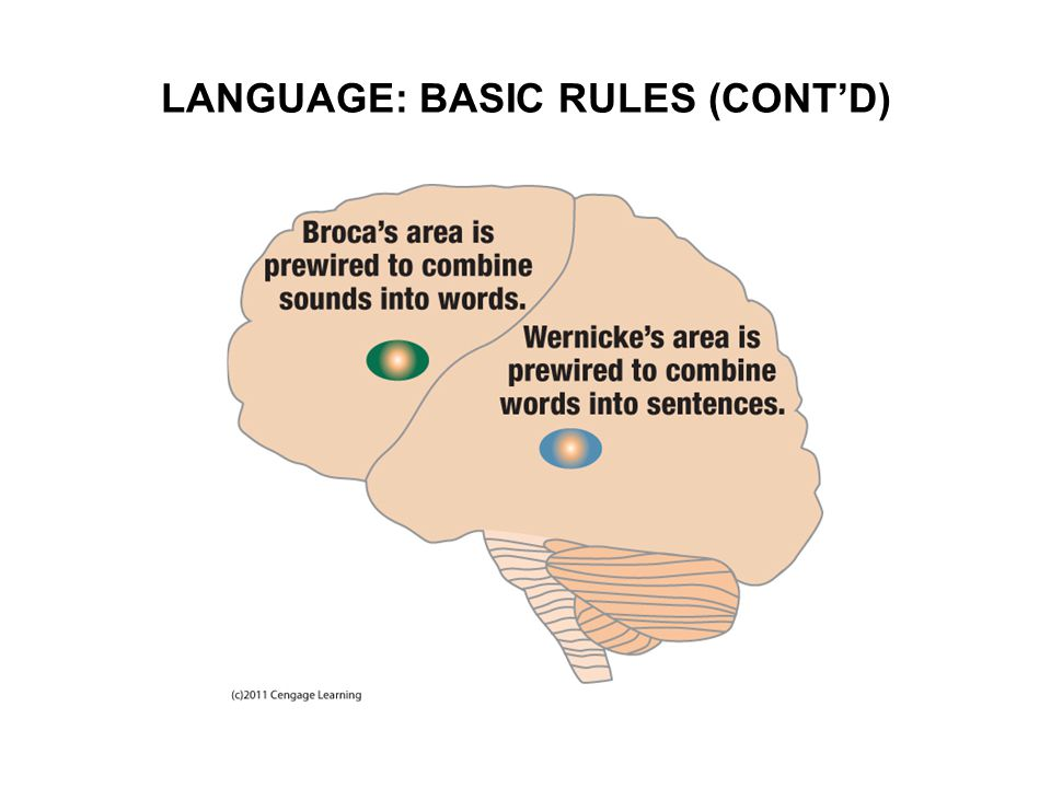 LANGUAGE: BASIC RULES (CONT'D)