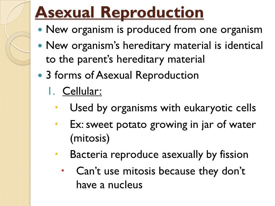 Bacteria reproduce asexually by mitosis worksheet