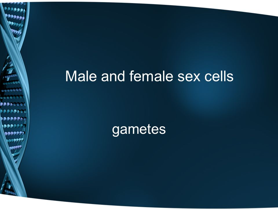 Male and female sex cells gametes
