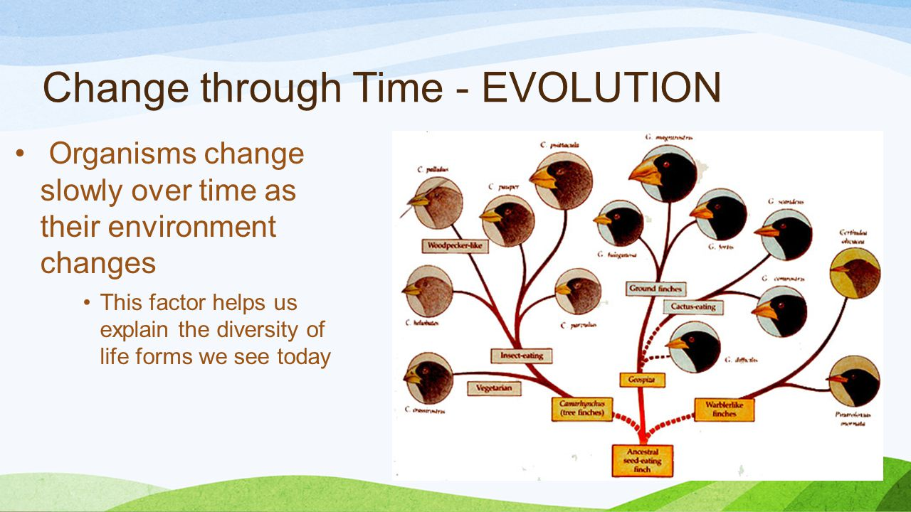 Change through Time - EVOLUTION Organisms change slowly over time as their environment changes This factor helps us explain the diversity of life forms we see today