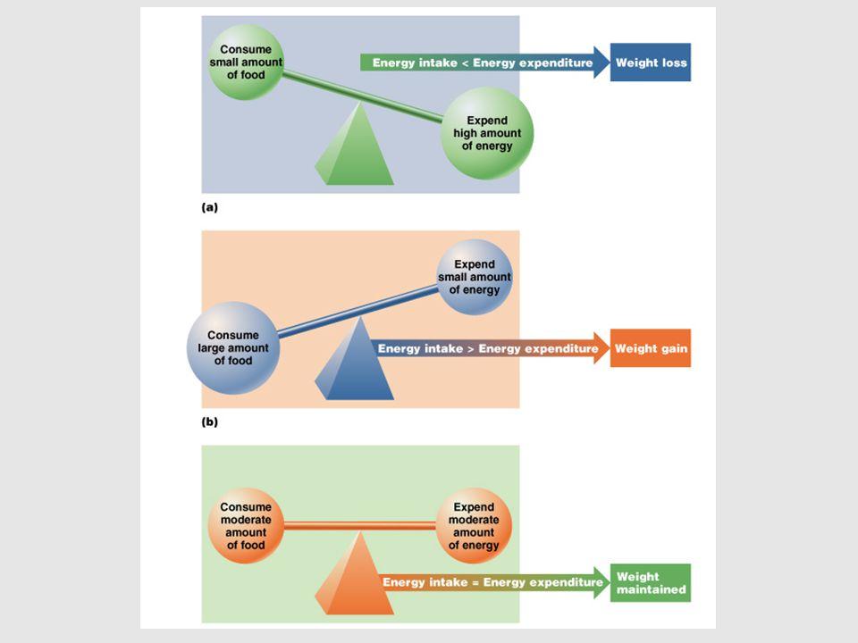 energy expenditure intake and balance
