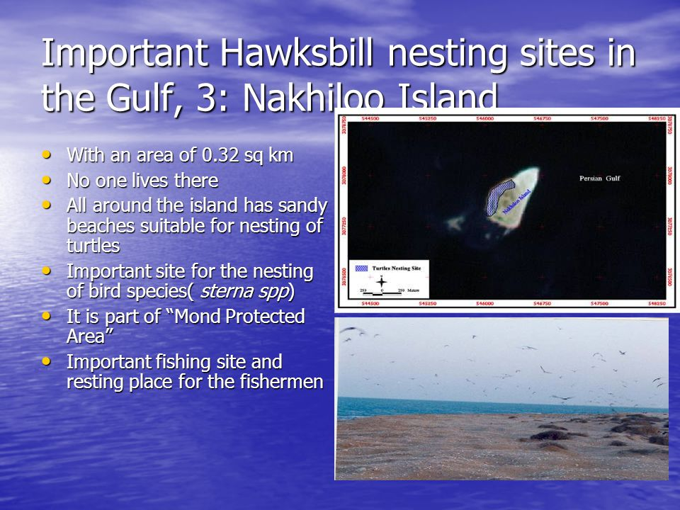 Important Hawksbill nesting sites in the Gulf, 3: Nakhiloo Island With an area of 0.32 sq km With an area of 0.32 sq km No one lives there No one lives there All around the island has sandy beaches suitable for nesting of turtles All around the island has sandy beaches suitable for nesting of turtles Important site for the nesting of bird species( sterna spp) Important site for the nesting of bird species( sterna spp) It is part of Mond Protected Area It is part of Mond Protected Area Important fishing site and resting place for the fishermen Important fishing site and resting place for the fishermen