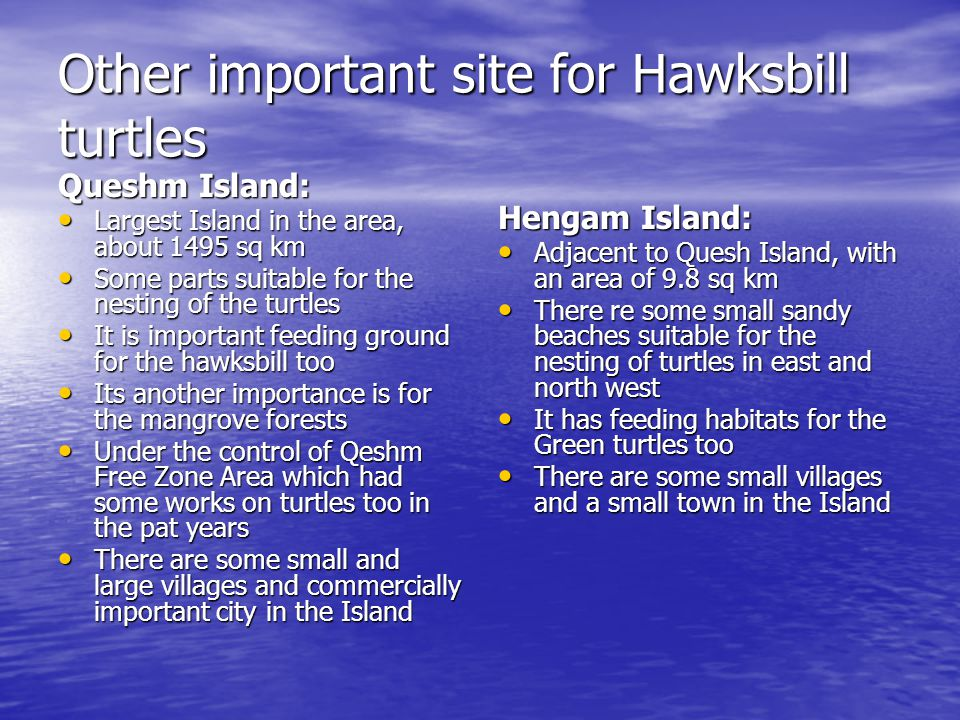 Other important site for Hawksbill turtles Queshm Island: Largest Island in the area, about 1495 sq km Largest Island in the area, about 1495 sq km Some parts suitable for the nesting of the turtles Some parts suitable for the nesting of the turtles It is important feeding ground for the hawksbill too It is important feeding ground for the hawksbill too Its another importance is for the mangrove forests Its another importance is for the mangrove forests Under the control of Qeshm Free Zone Area which had some works on turtles too in the pat years Under the control of Qeshm Free Zone Area which had some works on turtles too in the pat years There are some small and large villages and commercially important city in the Island There are some small and large villages and commercially important city in the Island Hengam Island: Adjacent to Quesh Island, with an area of 9.8 sq km Adjacent to Quesh Island, with an area of 9.8 sq km There re some small sandy beaches suitable for the nesting of turtles in east and north west There re some small sandy beaches suitable for the nesting of turtles in east and north west It has feeding habitats for the Green turtles too It has feeding habitats for the Green turtles too There are some small villages and a small town in the Island There are some small villages and a small town in the Island