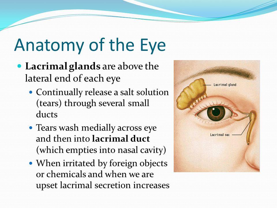 Fine Eye Ducts Anatomy Photo Human Anatomy Images