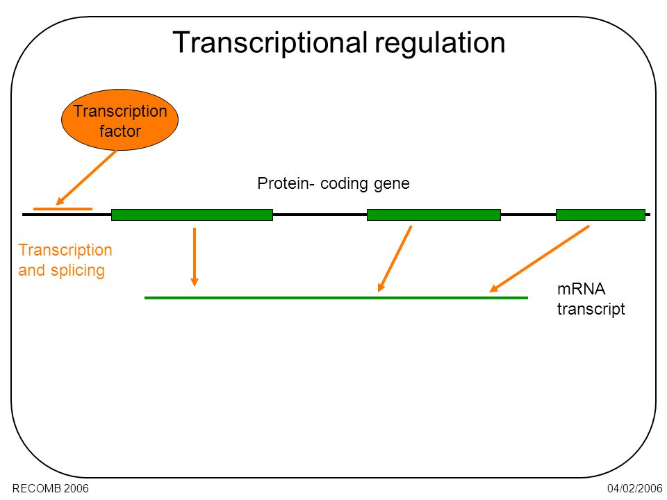 04/02/2006RECOMB 2006 Transcriptional regulation Transcription and splicing mRNA transcript Protein- coding gene Transcription factor