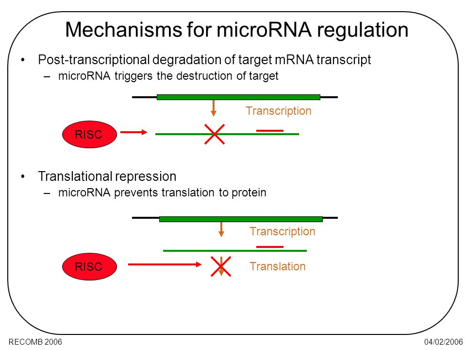 04/02/2006RECOMB 2006 Post-transcriptional degradation of target mRNA transcript –microRNA triggers the destruction of target Mechanisms for microRNA regulation Translational repression –microRNA prevents translation to protein RISC Transcription RISC Transcription Translation