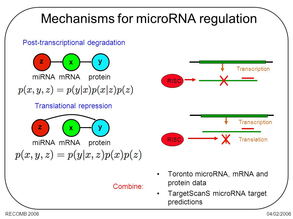 04/02/2006RECOMB 2006 Mechanisms for microRNA regulation Toronto microRNA, mRNA and protein data TargetScanS microRNA target predictions RISC Transcription Translation RISC miRNA x yz mRNAprotein x yz miRNAmRNAprotein Post-transcriptional degradation Translational repression Combine: