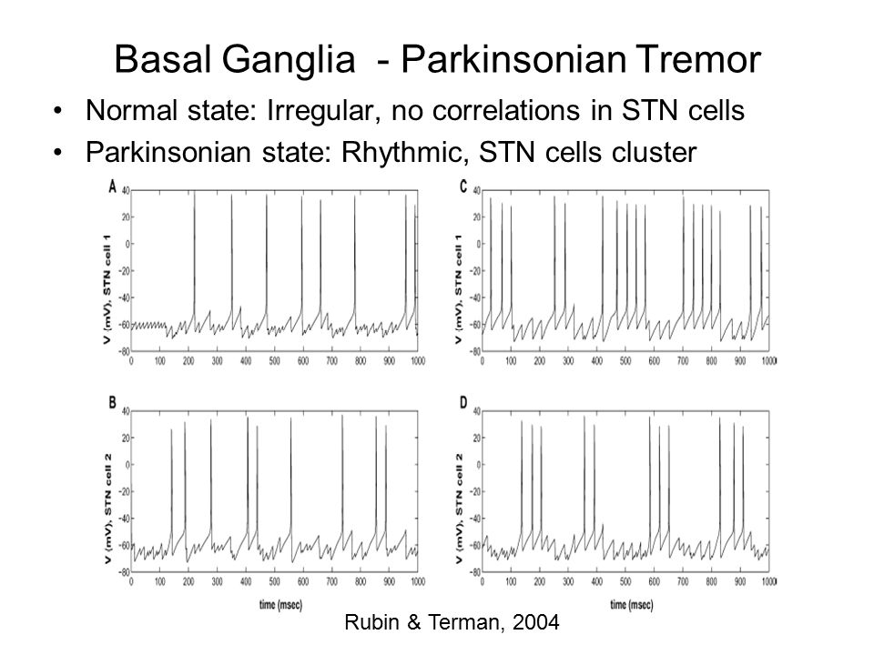 Basal Ganglia - Parkinsonian Tremor Normal state: Irregular, no correlations in STN cells Parkinsonian state: Rhythmic, STN cells cluster Rubin & Terman, 2004