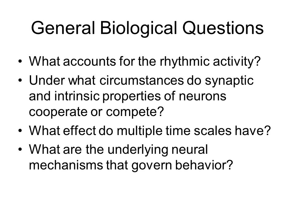 General Biological Questions What accounts for the rhythmic activity.