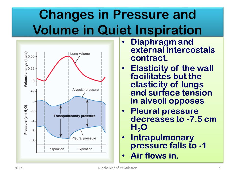 Changes in Pressure and Volume in Quiet Inspiration Diaphragm and external intercostals contract.