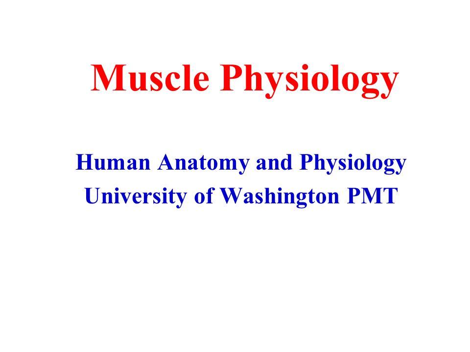 Atractivo Anatomy And Physiology Degree Bandera - Imágenes de ...