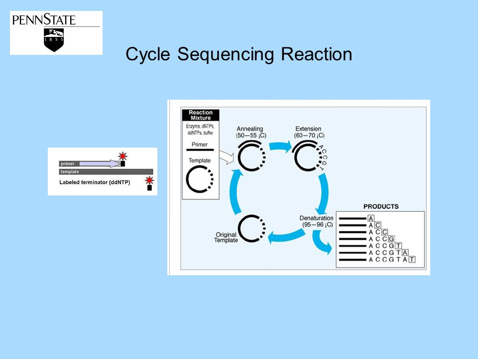 Cycle Sequencing Reaction
