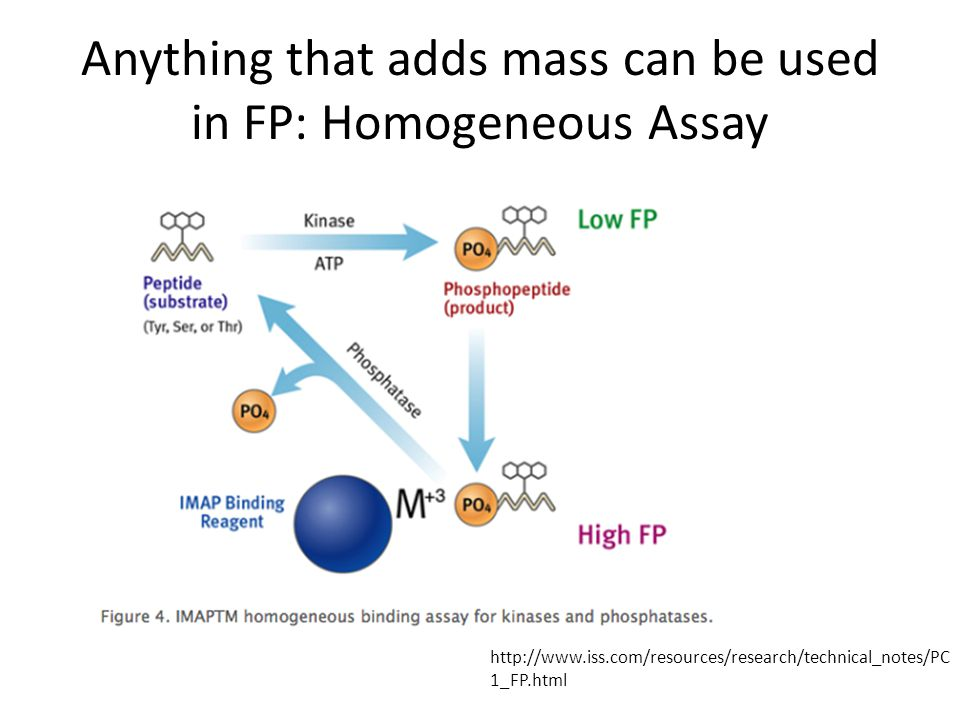Anything that adds mass can be used in FP: Homogeneous Assay   1_FP.html