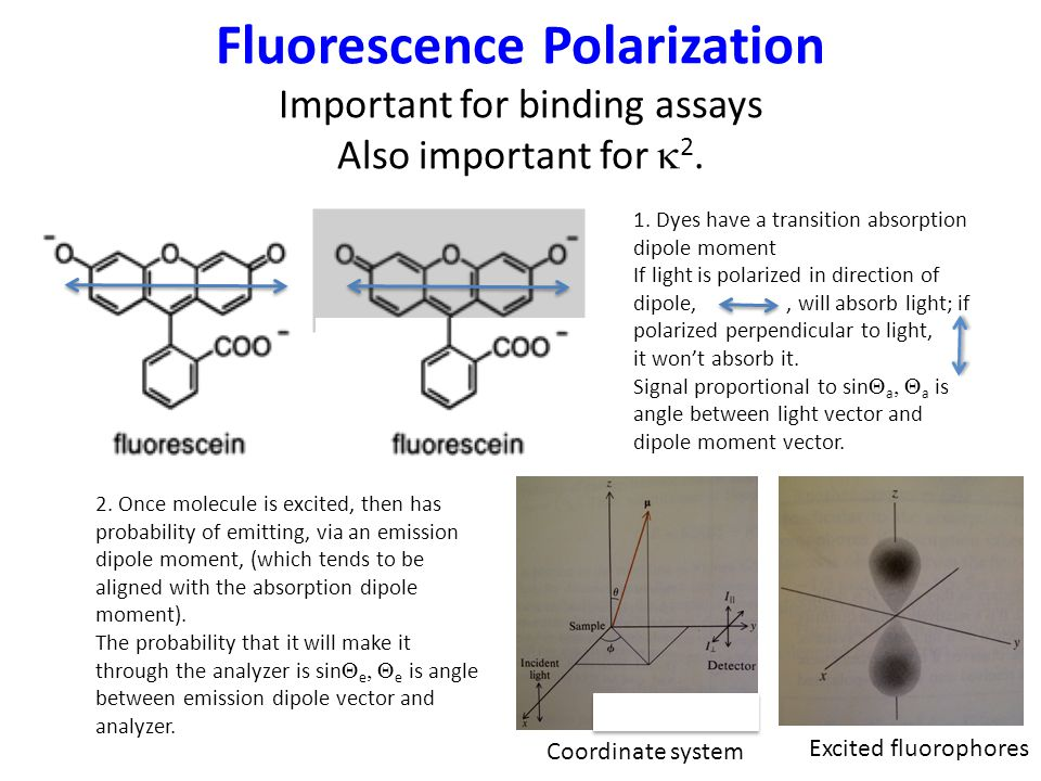 Fluorescence Polarization Important for binding assays Also important for  2.