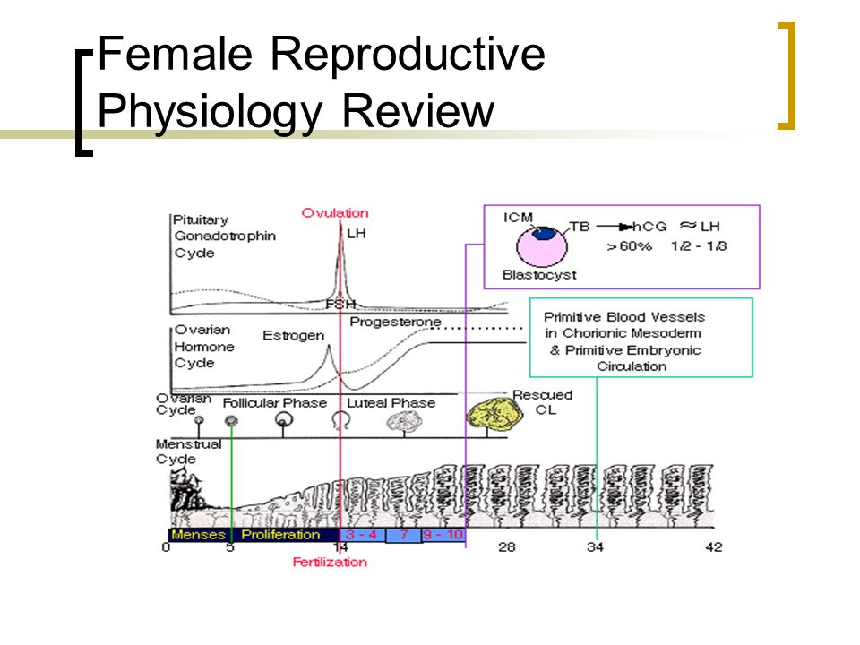 Female Reproductive Physiology Review