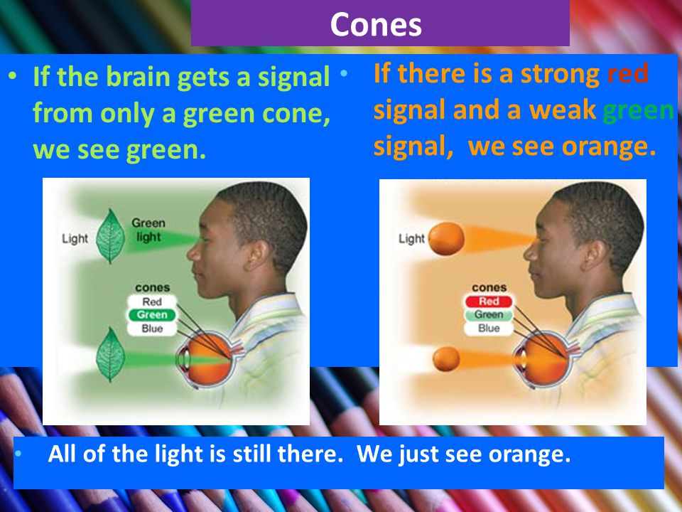 Cones If the brain gets a signal from only a green cone, we see green.