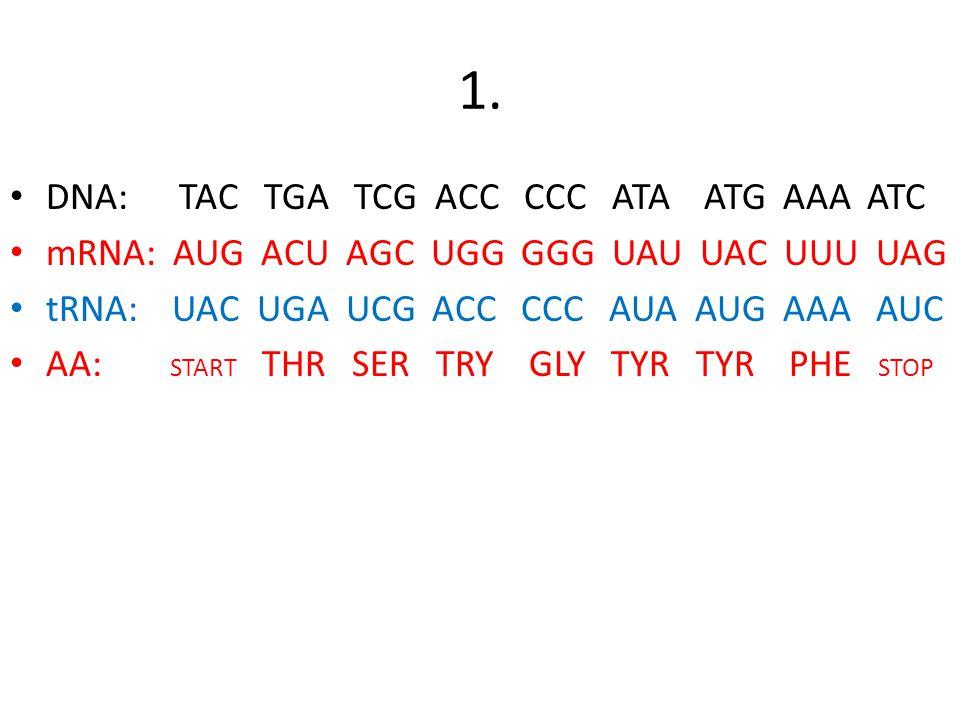 Worksheets Replication Transcription Translation Worksheet dna transcription and translation worksheet key intrepidpath 1 tac tga tcg acc ccc