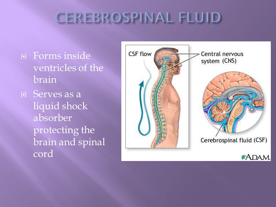  Forms inside ventricles of the brain  Serves as a liquid shock absorber protecting the brain and spinal cord