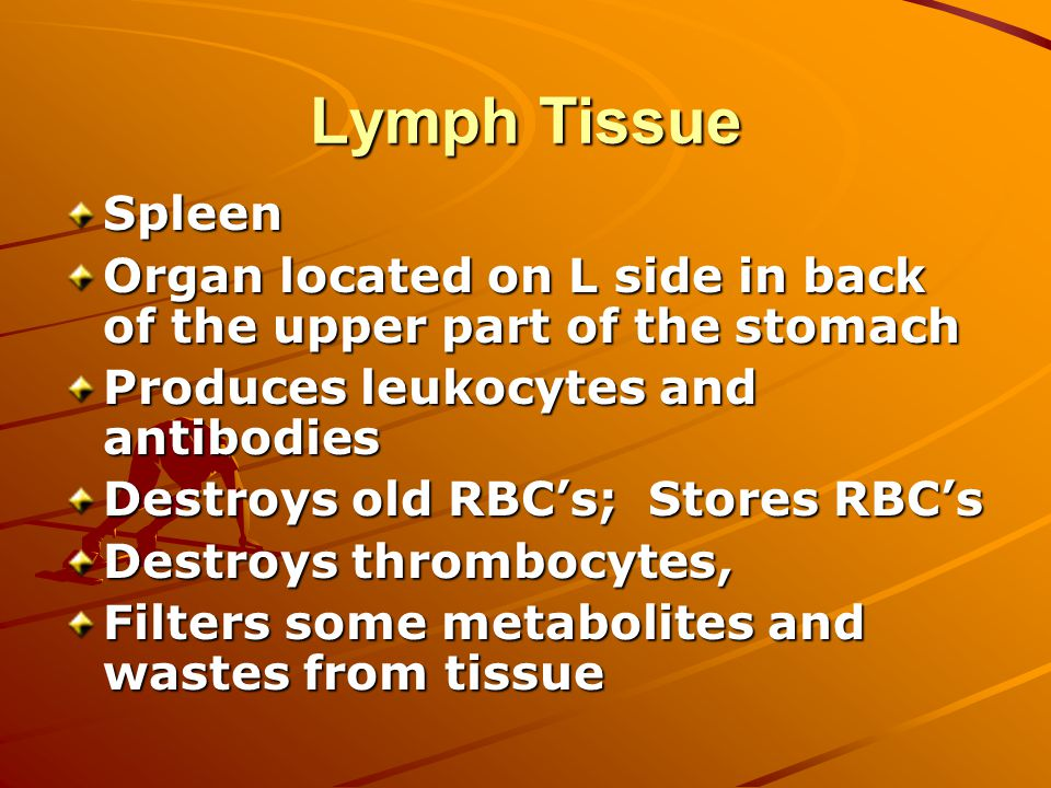 Lymph Tissue Spleen Organ located on L side in back of the upper part of the stomach Produces leukocytes and antibodies Destroys old RBC's; Stores RBC's Destroys thrombocytes, Filters some metabolites and wastes from tissue